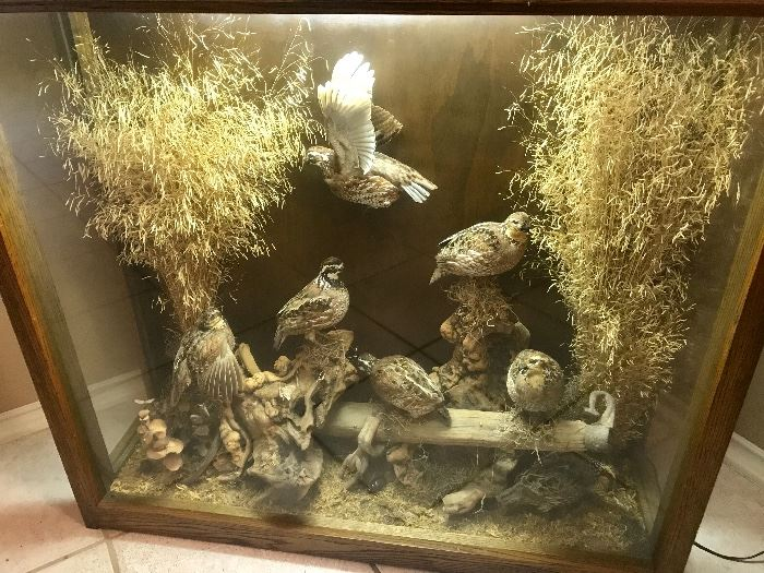 LARGE TAXIDERMY AVIARY WITH 7 QUAIL/LIGHTED