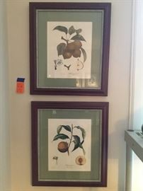 Pair of antique French fruit prints
