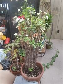 great garden!