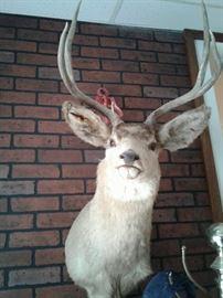 Deer head https://ctbids.com/#!/description/share/65261