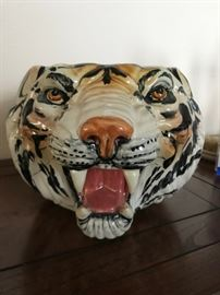 Italy Tiger