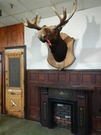 MOUNTED TAXIDERMY-OTHERS AVAILABLE