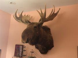 Mount Moose