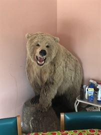 MountGrizzly