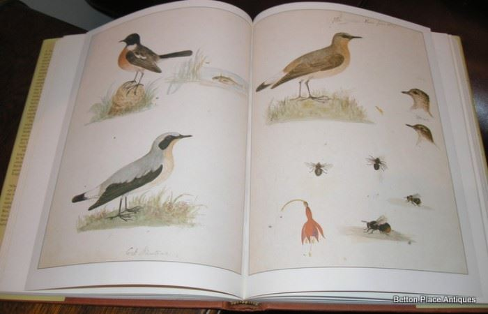 pictures from Scottish Naturalist