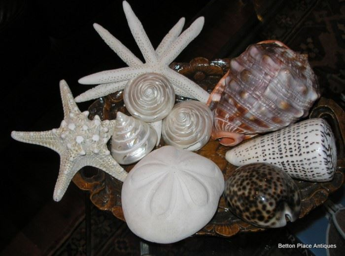 Shells and Coral yet to come