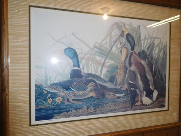 Nicely framed/matted Audubon litho
