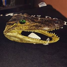 Alligator Taxidermied Head from New Orleans