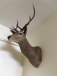 Red Stag Mount