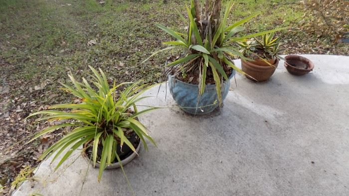 pots/plants