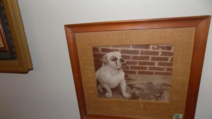 old dog print