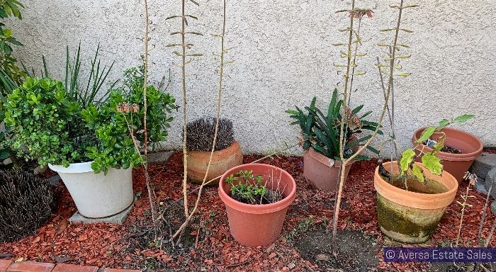 PLANTS and PATIO