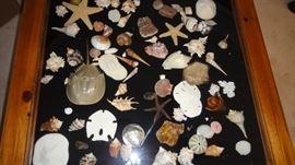 Sea Shells, and so many more