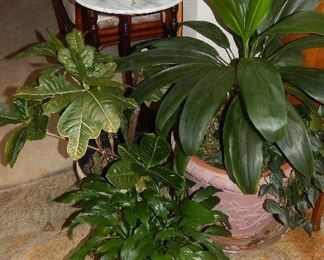 ASSORTED LIVING PLANTS THROUGHOUT THE HOME