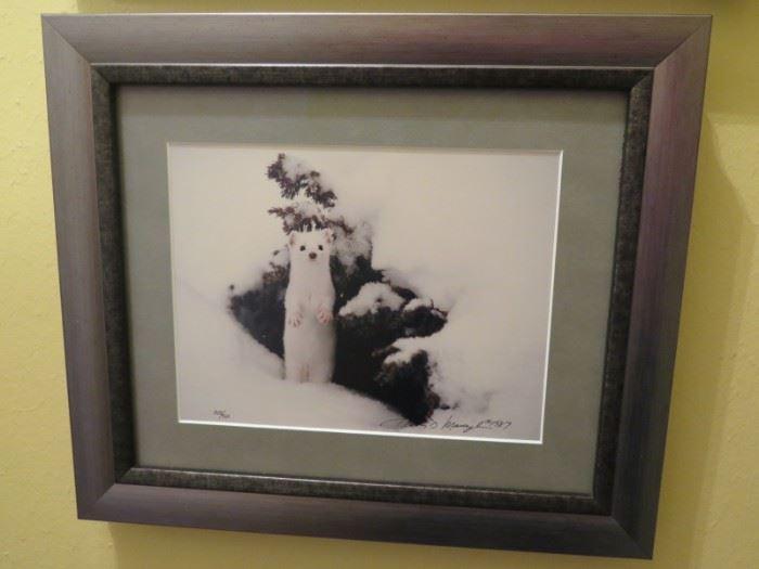 Thomas Mangelsen photo, original signature, ltd ed,