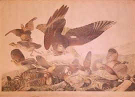 "John James Audubon , ""Virginian Partridge"" Plate 289, Chromolithography by Julien Bien, New York 1859 (plate size 27""x38"") in original birdseye maple frame."