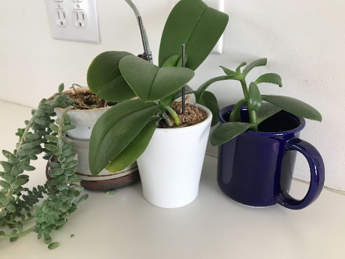 wonderful selection of houseplants