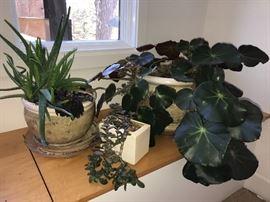 wonderful collection of houseplants