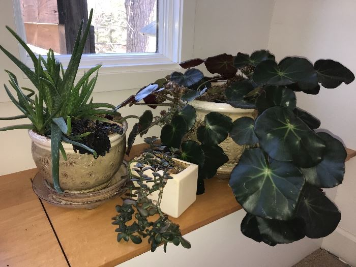 wonderful collection of houseplants