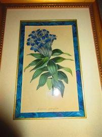 19th century botanical