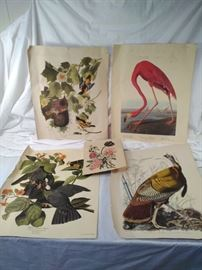 vintage Audubon prints