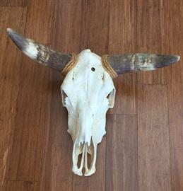 Nice Steer Head