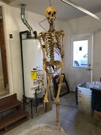 Real skeleton-Owners got it 40 Years ago in Medical school.