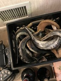 2 crates of Shofar horns