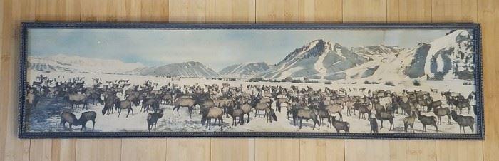 Historic Stephen N. Leek photograph of the Jackson Hole Wyoming elk herd.