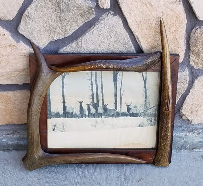Stephen N. Leek photograph of elk in a frame with elk antler points from the historic Leeks Lodge in Jackson, Wyoming.