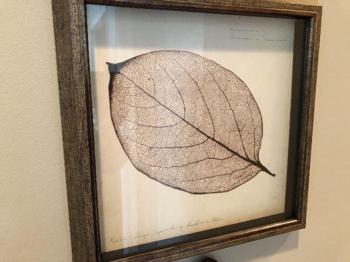 One of three very nice frames leaf drawings