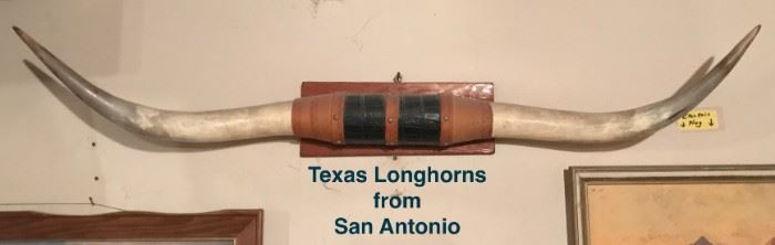 Texas Longhorns brought back from San Antonio