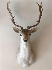 Deer Mount Taxidermy