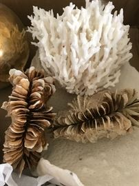 Coral and Shell Specimens