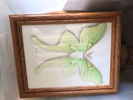 A lovely drawing of a moth