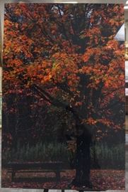 Lovely tree and bench photograph in the style of Peter Lik on plexiglass.