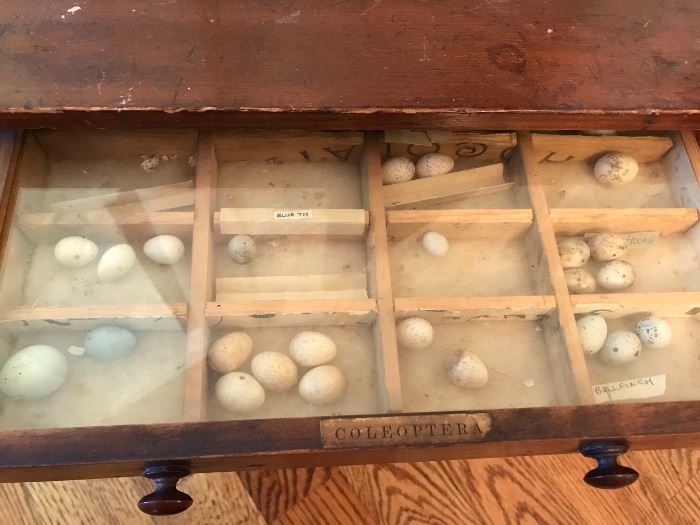 ....more bird eggs in the cabinet