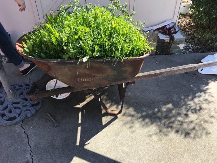 Vintage Wheelbarrow for plants