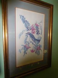 Framed Audubon