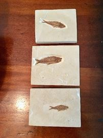 Fossil Fish Plaques