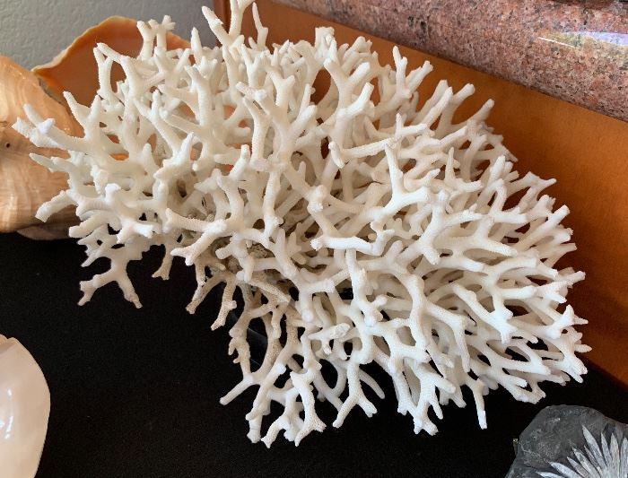 Natural White Coral Reef