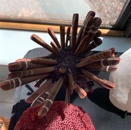 Sea Urchin Spike