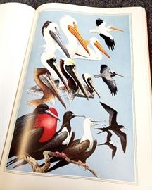 The Field Guide Art of Roger Tory Peterson - Firest Edition 2 volume leatherbound set - Eastern Birds and Western Birds - from Easton Press