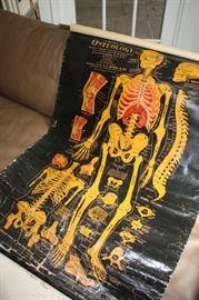 """Antique """"Osteology"""" chart"""