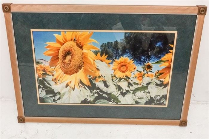 262. Framed Photograph Of Sunflowers