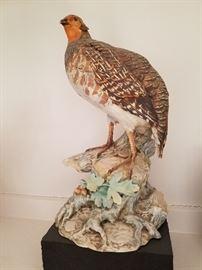Tay Partridge