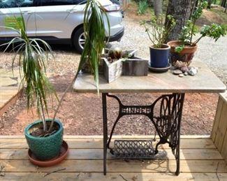 house plants; Singer cast iron treadle table