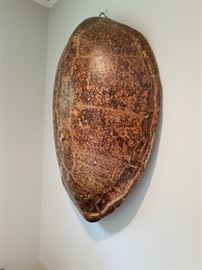 Incredible Antique Sea Turtle Shell