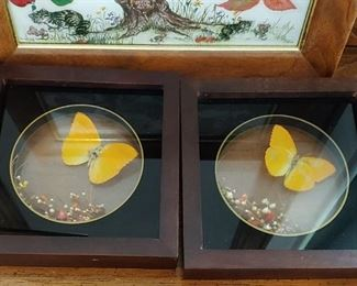 Butterfly Wall Displays