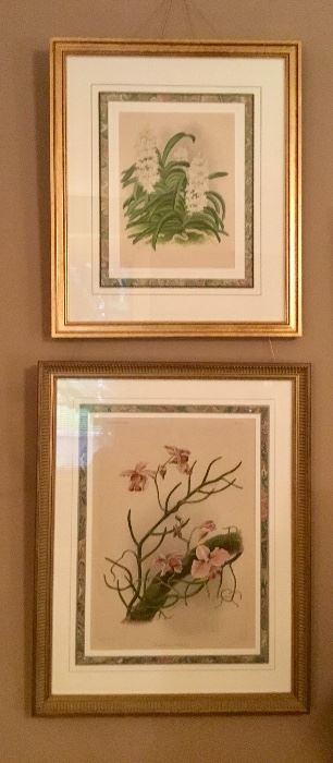 Lots of orchid framed pics